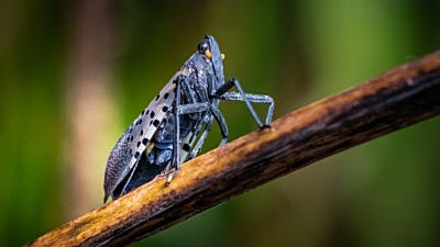Common Invasive Insects and What You Need to Know