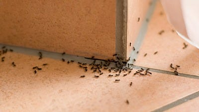 Got Ants & Not Sure Where to Start?