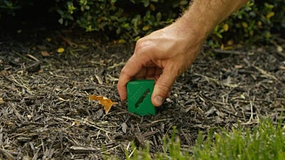 How To Bait Ants