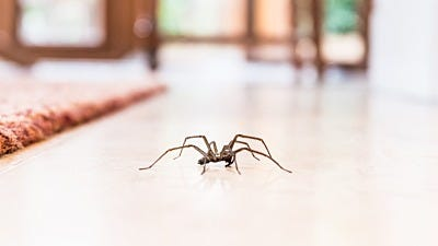 How to Stop Spider Invasions
