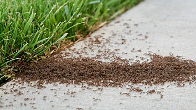 How to Use Ant Dust