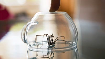 Top 9 Uninvited Insect House Guests for Fall