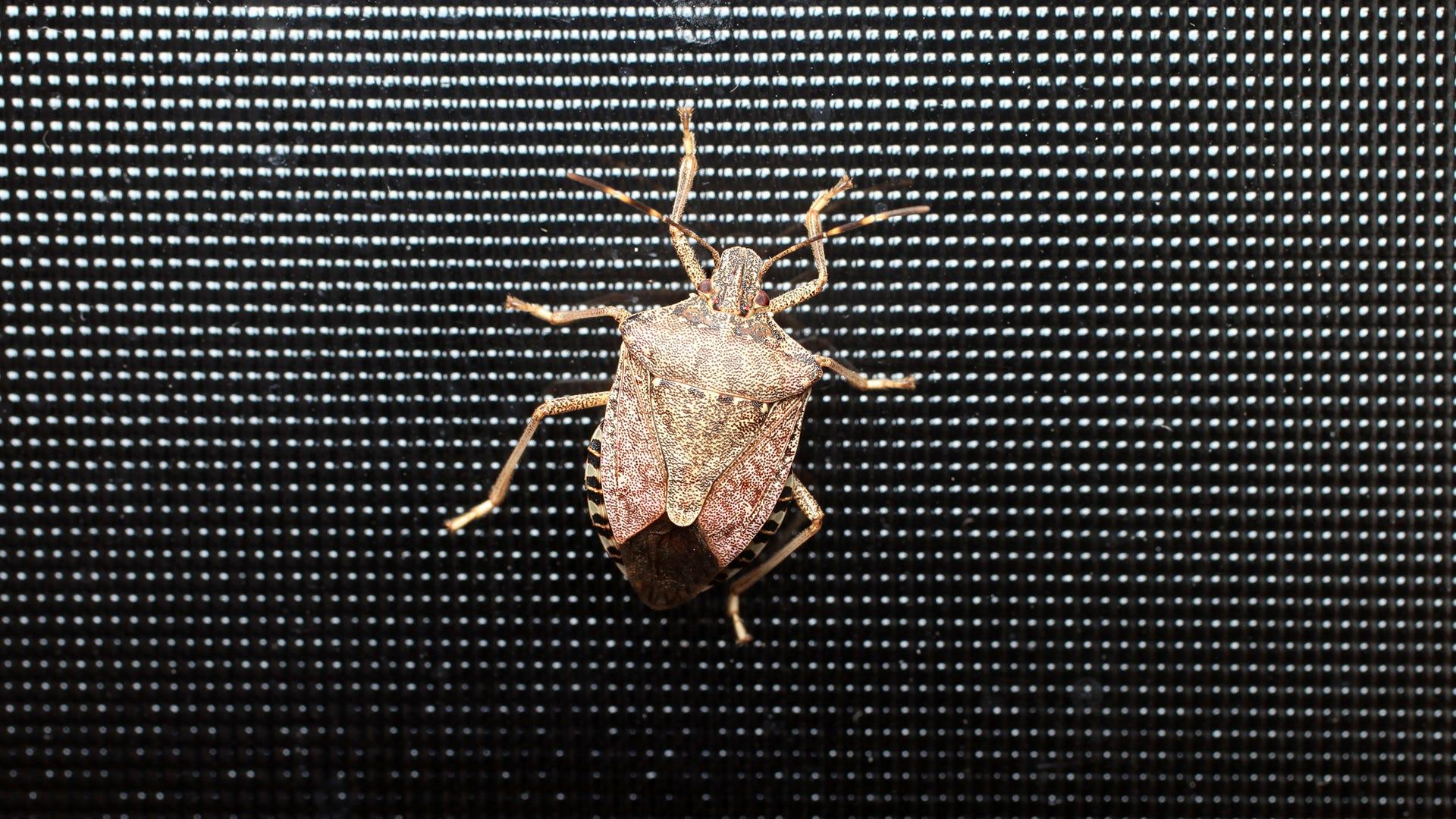 bug on screen