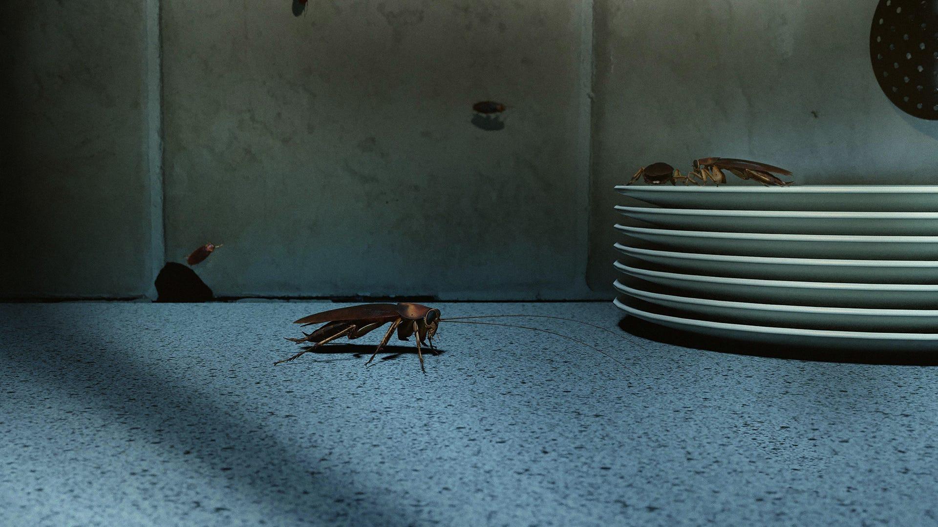 bug on counter