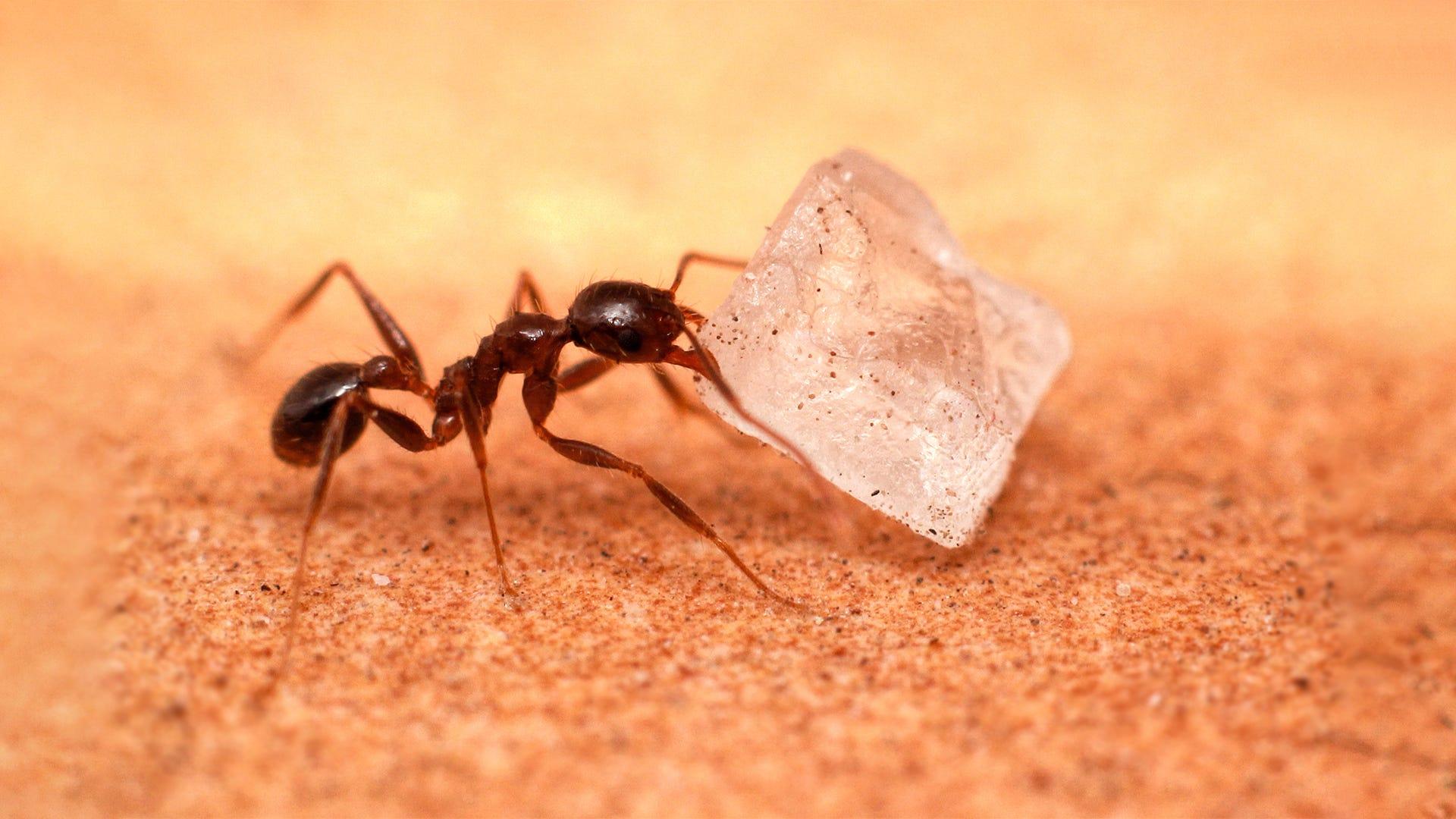 Get Rid of Sugar Ants in 3 Steps
