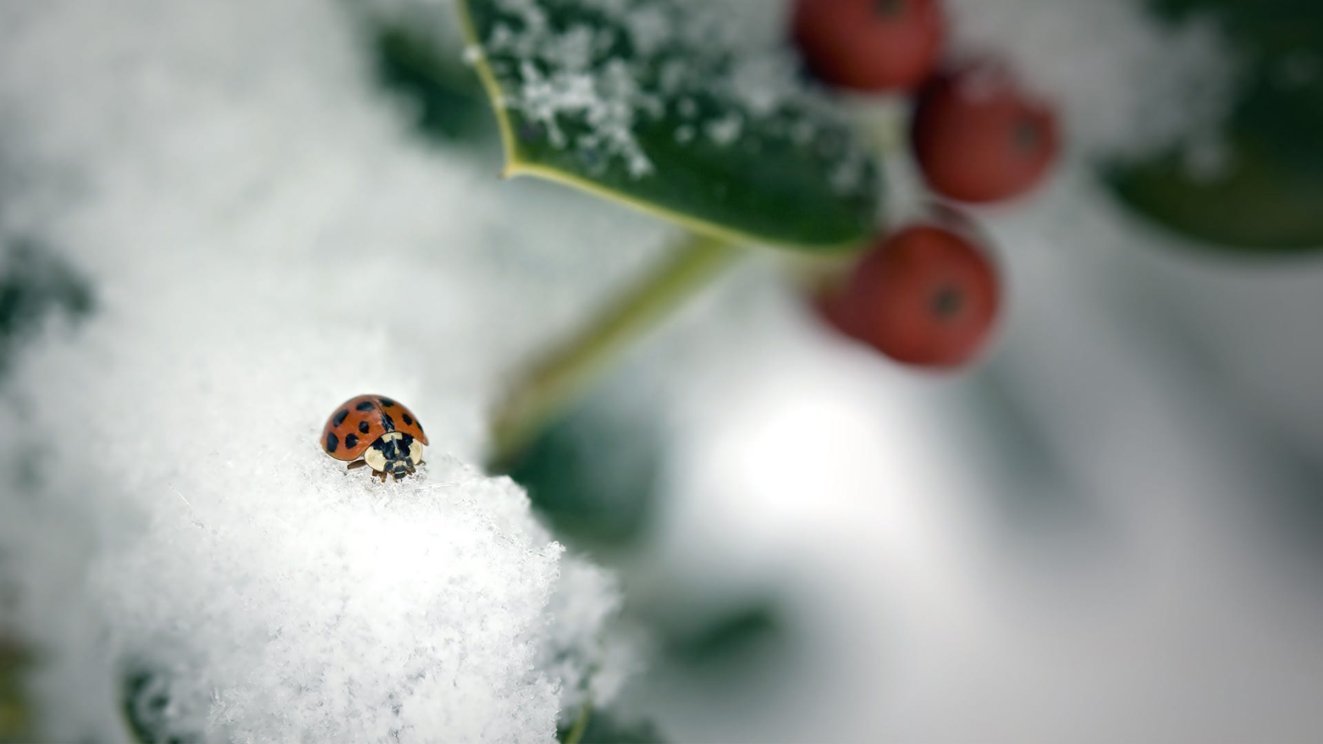 How Do Cold Temperatures Affect Insects?