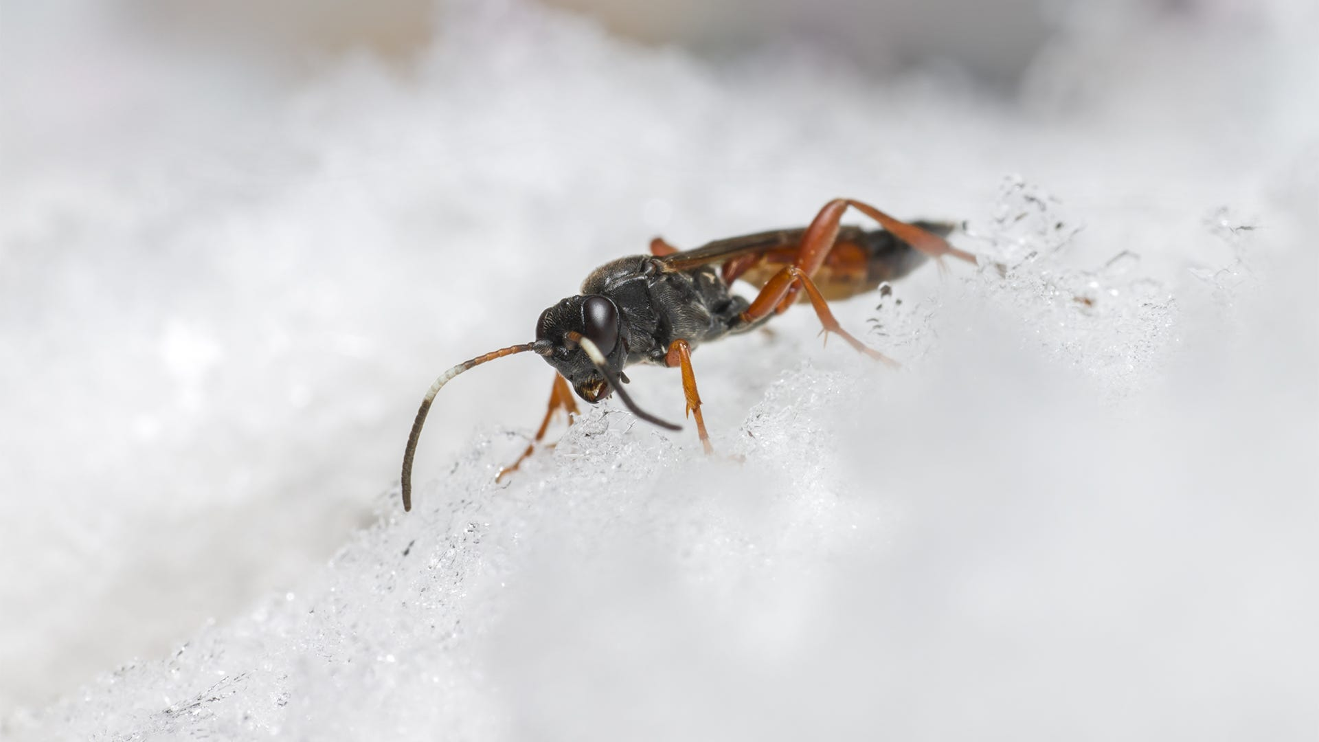How Weather Affects Pest Populations
