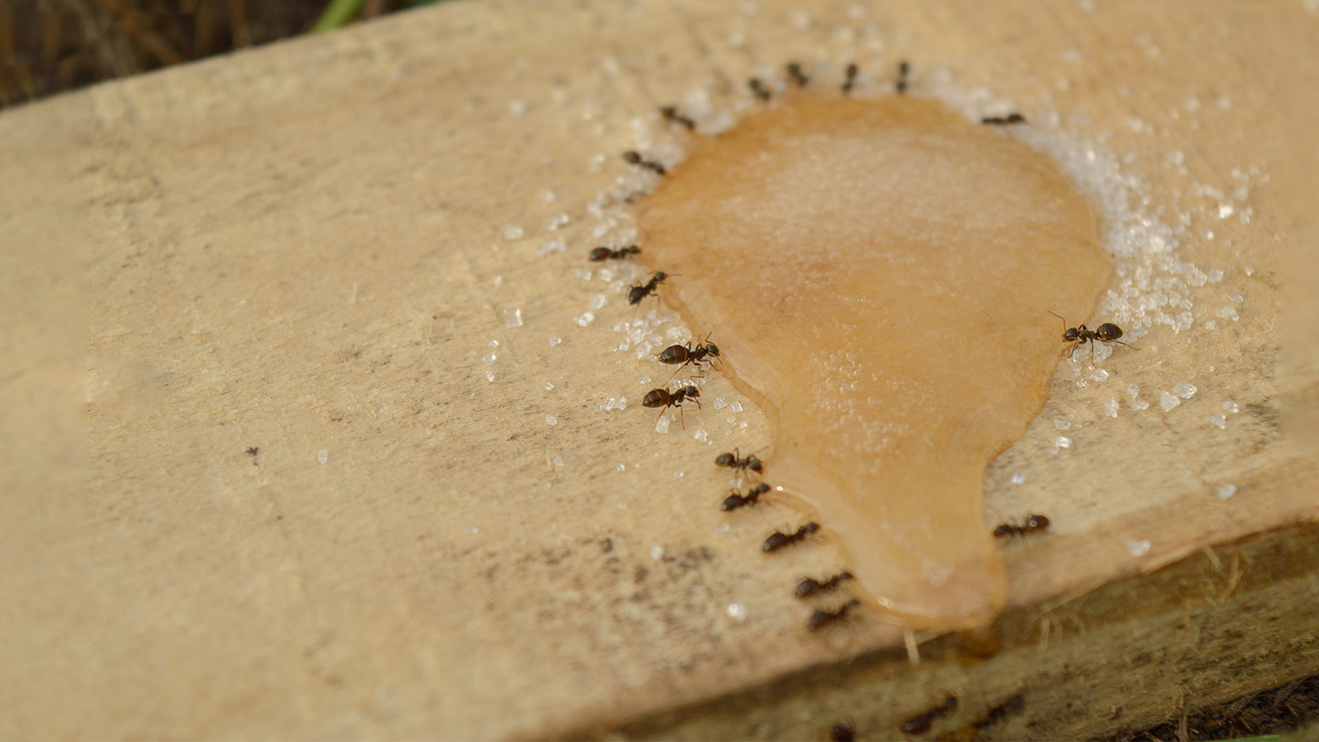 How to Clean Up Spilled Ant Bait