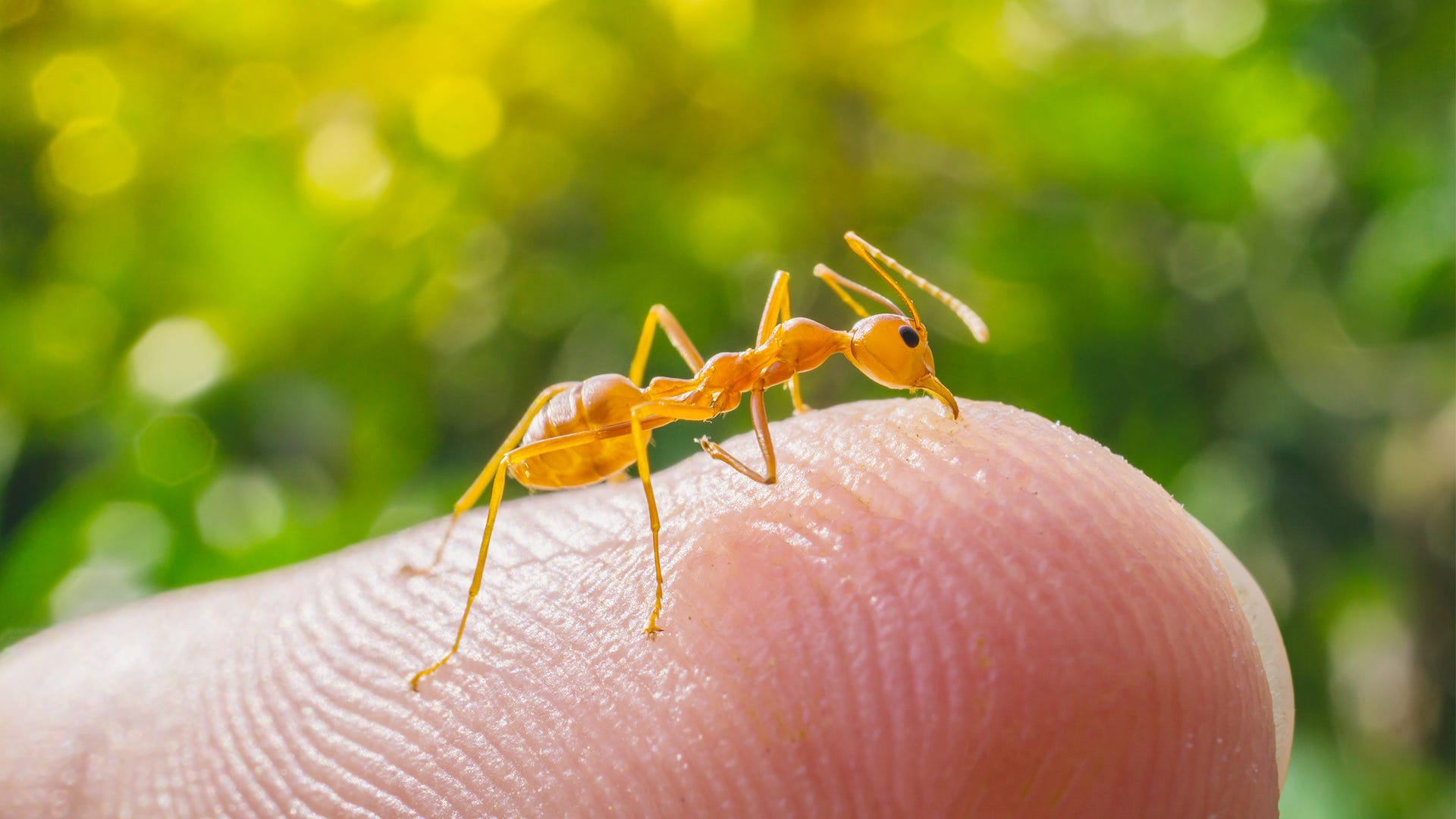 How to ID Insects