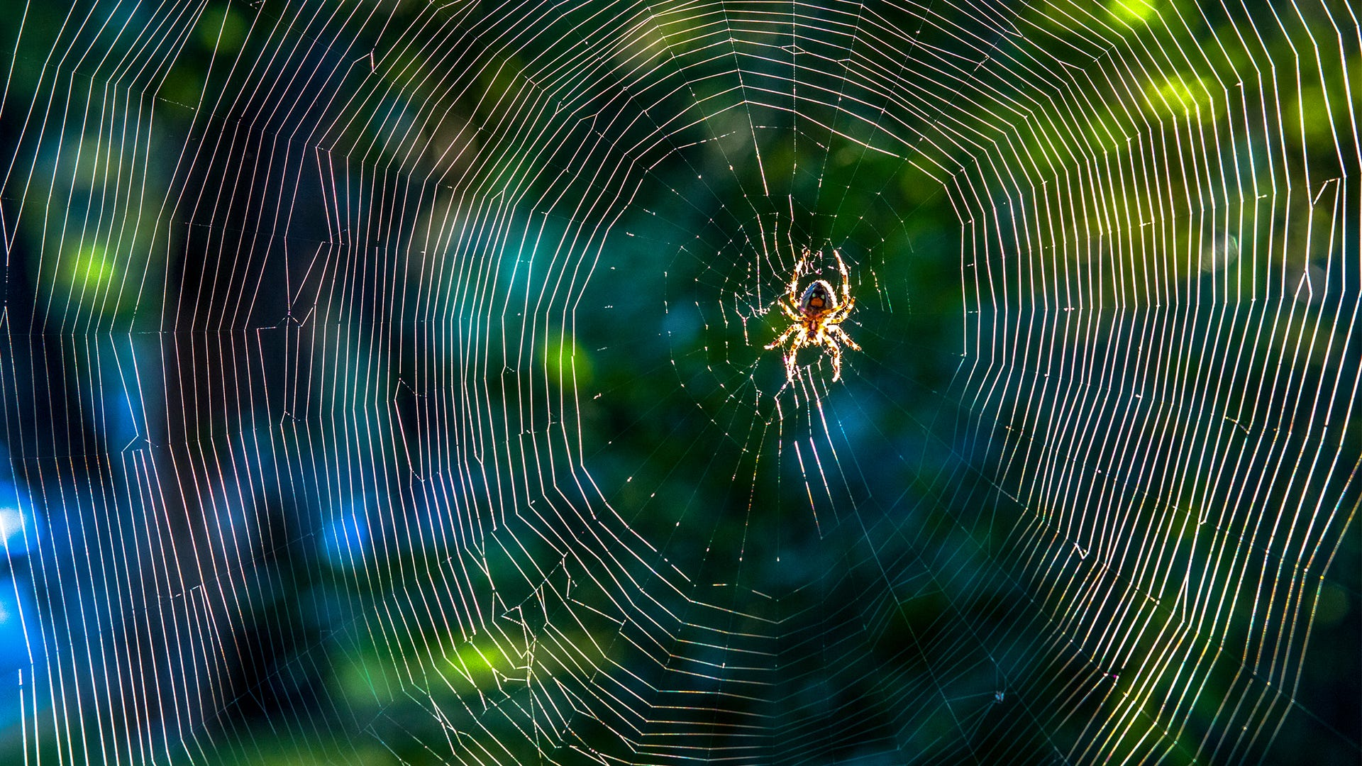 How to ID Spiders by Their Webs