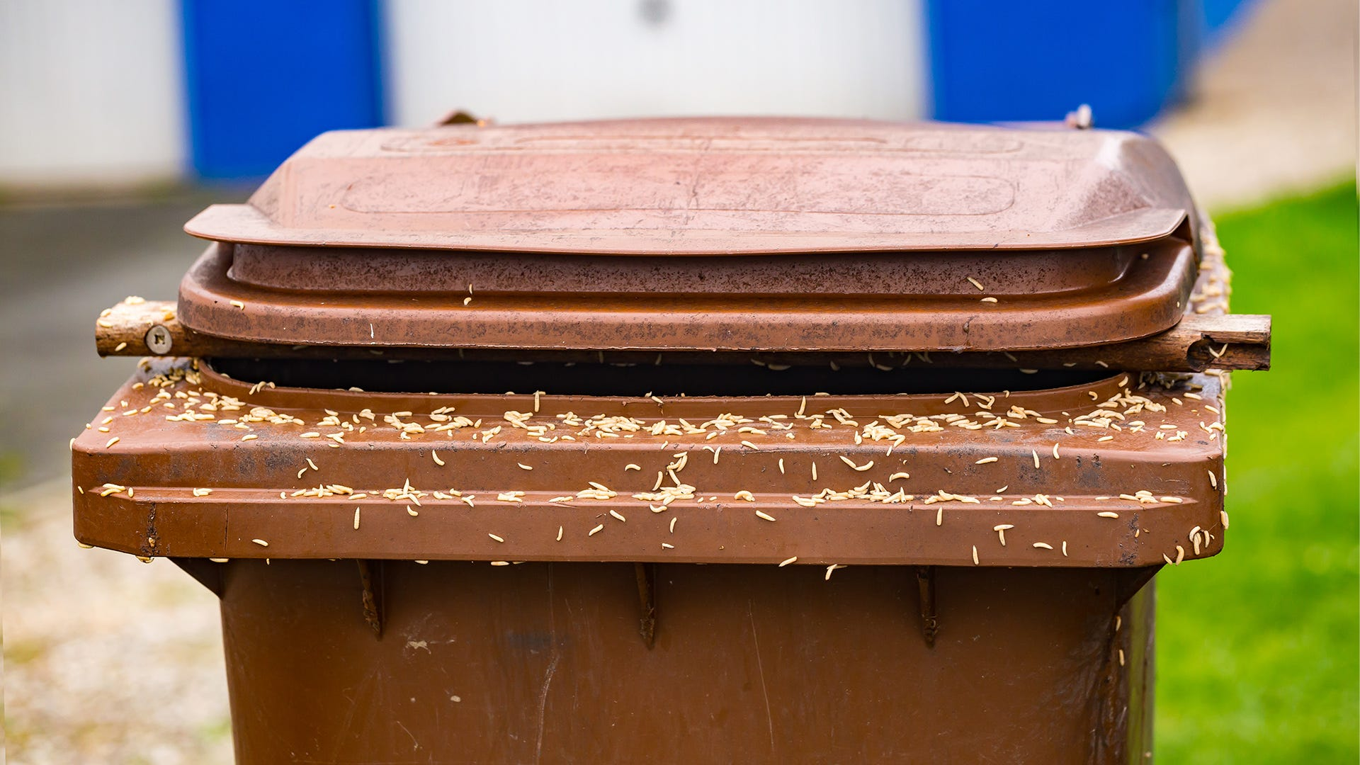 How to Manage A Trash Can Maggot Infestation