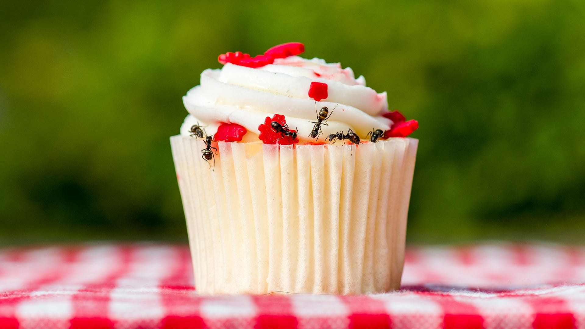 Keep Ants from Feasting on Your Summer Picnic