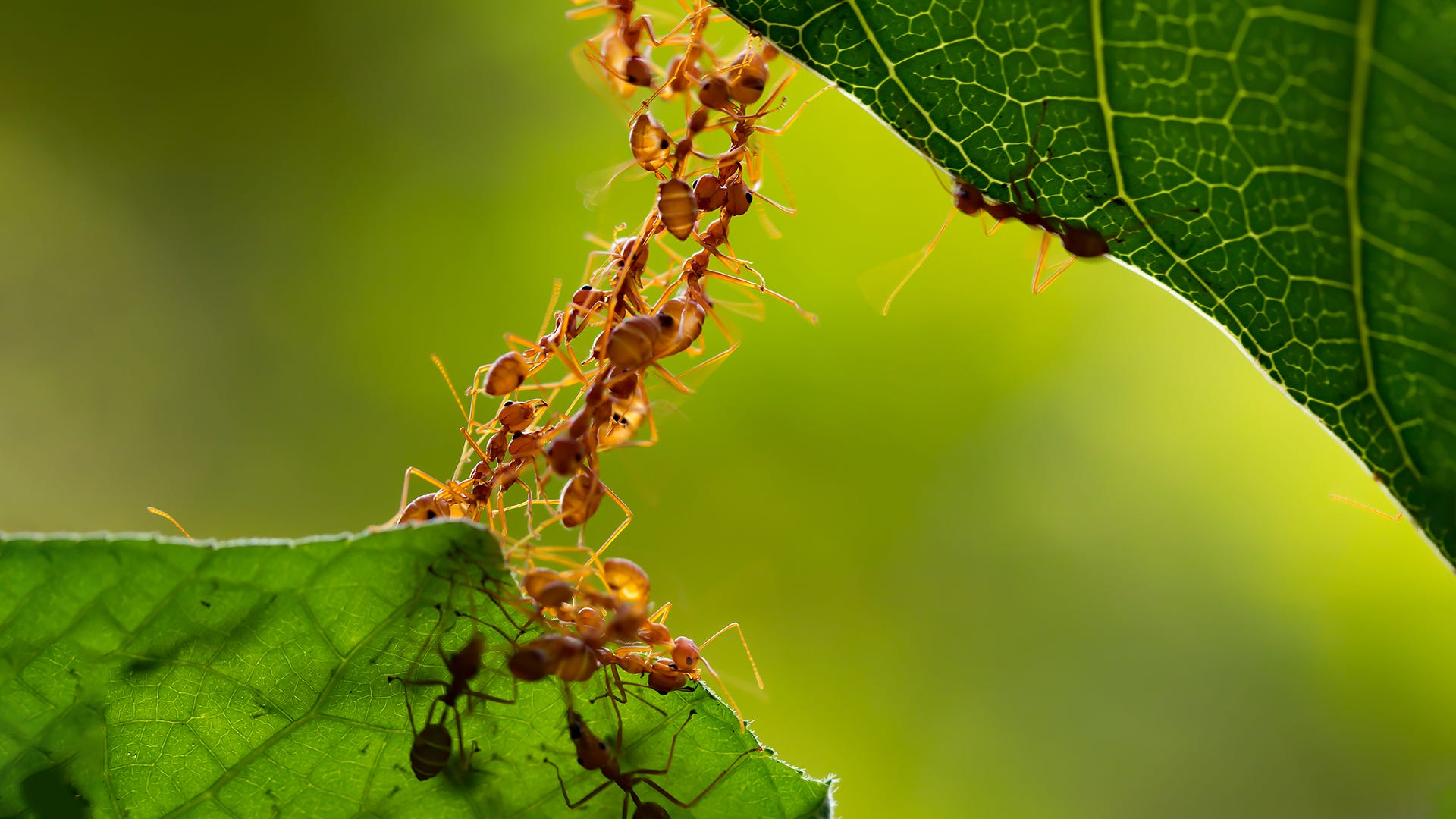 Surviving Spring with TERRO® - How to Get Rid of Ants, Wasps, Spiders and Other Insects