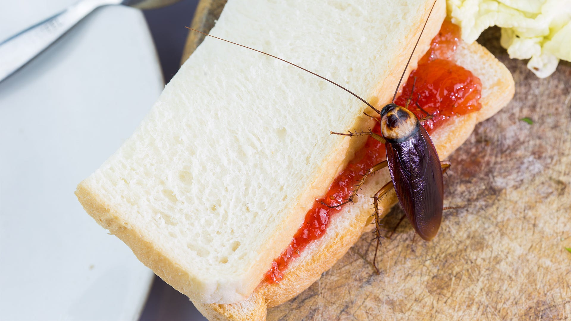 Why Do I Have Cockroaches in My Home?