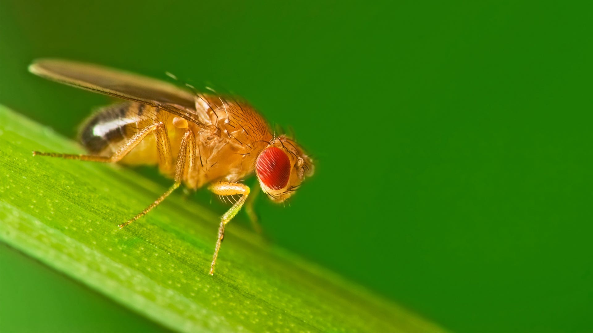 The 10 Most Common Fruit Fly Questions Answered