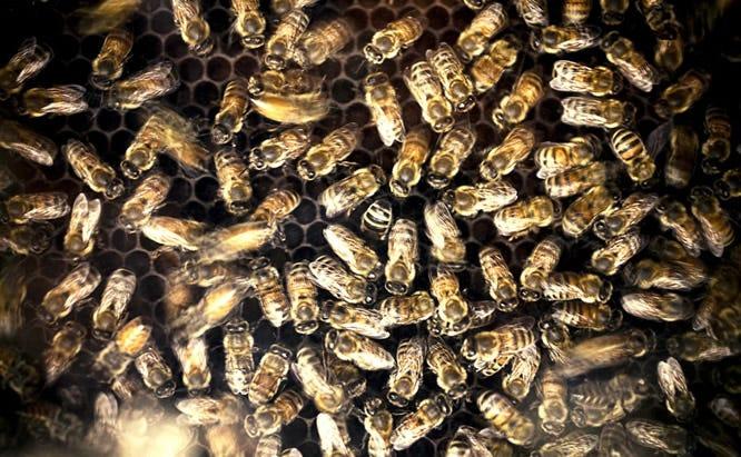 Cold Temp Bees
