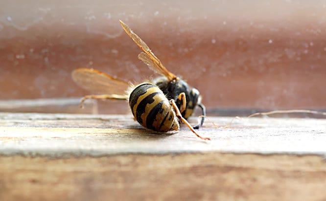 Cold Temp Bee