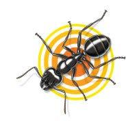 surviving ants