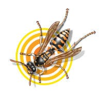 surviving wasps