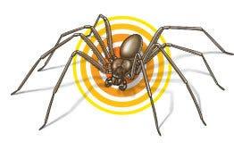 surviving spiders